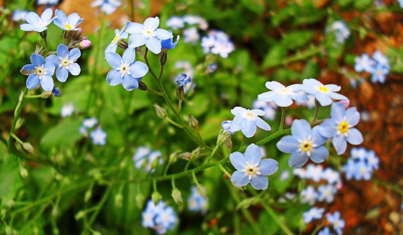 Miniaturi albastre