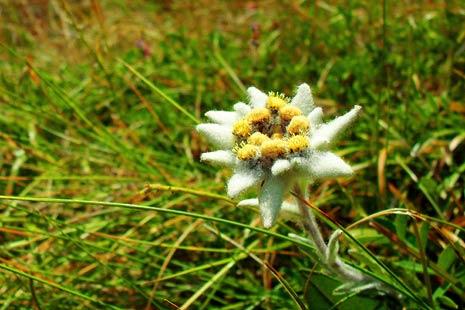 Portret floare de colt